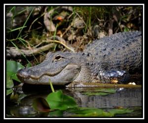 Everglades NP X 13