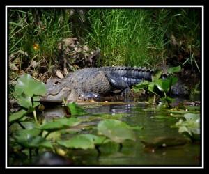 Everglades NP X 14
