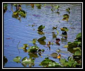 Everglades NP X 16
