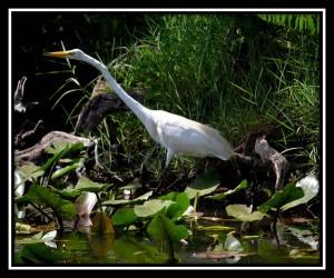 Everglades NP X 7