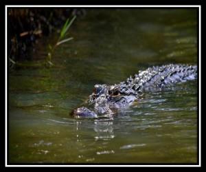 Everglades NP X 9