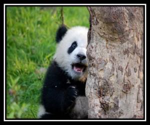 Chengdu 17