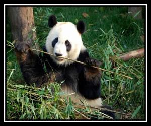 Chengdu 2