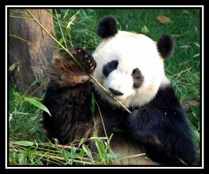 Chengdu 3