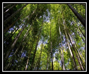 Arashimaya Bamboo Forest