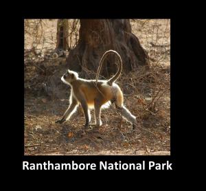 Ranthambore NP