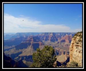 Grand Canyon National Park 9