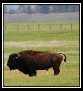 Grand Teton National Park 15