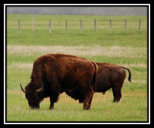 Grand Teton National Park 16