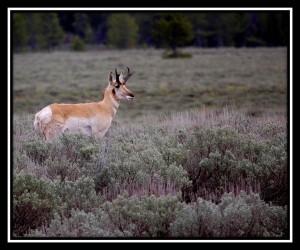 Grand Teton National Park 5