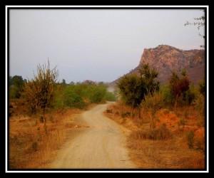 Ranthambore NP 16