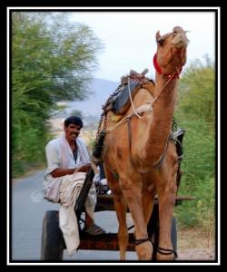 Sawai Madhopur 3