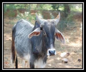 Sawai Madhopur 5