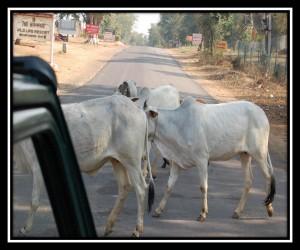 Sawai Madhopur 6