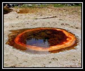 Yellowstone National Park 22