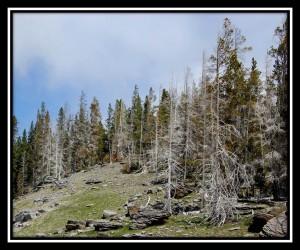 Yellowstone National Park 23