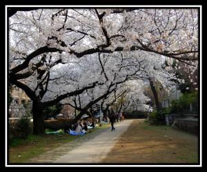 University of Tokyo 2