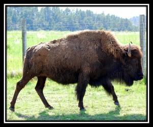 Custer SP 1