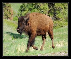 Custer SP 2
