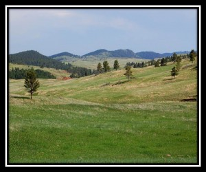 Custer SP 3