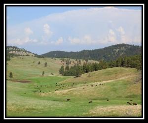 Custer SP 4