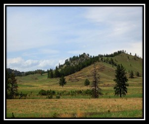 Custer SP 9