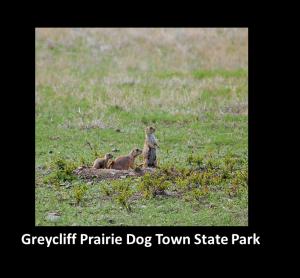 Greycliff Prairie Dog Town SP