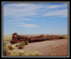 Petrified Forest National Park 10