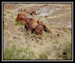 Petrified Forest National Park 11