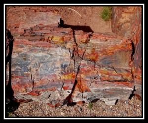 Petrified Forest National Park 12