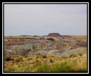 Petrified Forest National Park 15