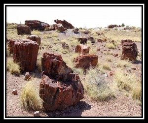 Petrified Forest National Park 2