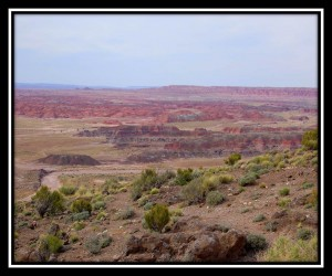 Petrified Forest National Park 25