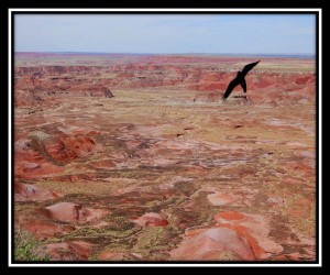 Petrified Forest National Park 27
