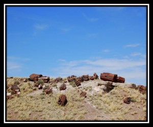 Petrified Forest National Park 5
