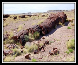Petrified Forest National Park 8