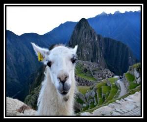 Machu Picchu 33