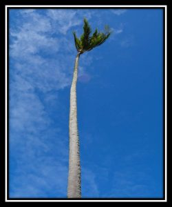 Big Island 30