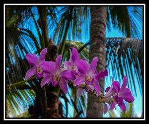 Big Island 78