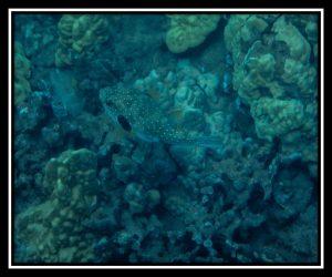 Maui 29