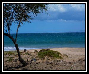 Maui 35